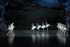 Ett lag av svanen som tar off-ThesvanLakeside-balett svan sjön Arkivbilder