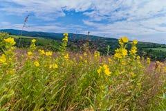 Ett landskap av guling blommar i gräset mot bakgrunden av de avlägsna bergen under natthimlen royaltyfria bilder