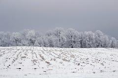 Ett landskap för vinter för lantgårdfält Royaltyfri Foto