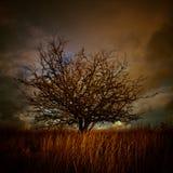 Ett landskap med det lilla trädet Julian Bound Arkivbilder