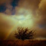 Ett landskap med det lilla trädet och regnbågen Julian Bound Royaltyfri Fotografi