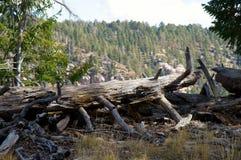 Ett landskap med ett stupat träd Fotografering för Bildbyråer