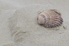 Ett langetterat skal på den Bournemouth stranden Royaltyfria Bilder