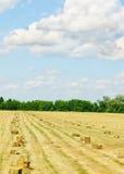 Ett lantgårdfält Fotografering för Bildbyråer