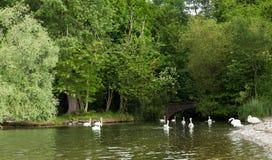 Ett lilla Green River som flödar in i sjön Leman med beautif Arkivbilder