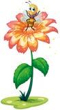 Ett litet bi ovanför den jätte- blomman Arkivfoton
