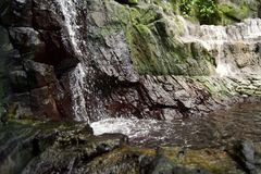 Ett litet damm med växter, filialer och steniga berg och klippor royaltyfri fotografi