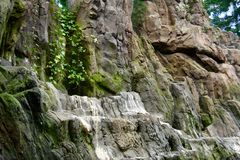 Ett litet damm med växter, filialer och steniga berg och klippor royaltyfria bilder