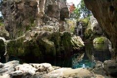 Ett litet damm med växter, filialer och steniga berg och klippor royaltyfri bild