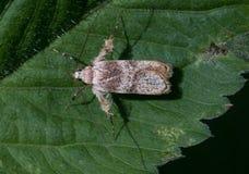 Ett litet djur på en grön tjänstledighet Royaltyfria Bilder
