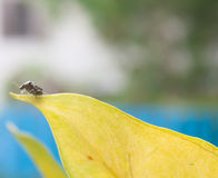 Ett litet fel på det gula bladet med suddig bakgrund Royaltyfria Foton
