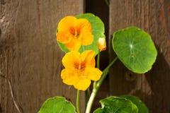 Ett litet grönt blad och en orange blomma två Arkivbild