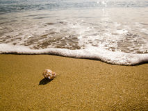 Ett litet havskal Fotografering för Bildbyråer