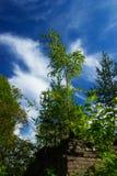 Ett litet lövfällande träd, som växte på taket av ett tegelstenhus Royaltyfria Foton