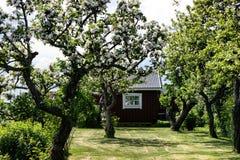 Ett litet litet ställe i trädgården Arkivbilder