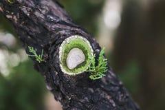 Ett litet snitt på trädstammen med härliga gröna sidor Arkivbilder