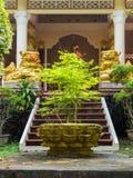 Ett litet träd framme av en buddistisk tempel Royaltyfria Foton