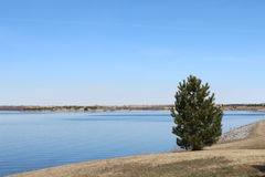 Ett litet träd på sidan av en sjö under den blåa himlen Arkivfoton