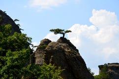 Ett litet träd växer överst av ett berg och elasticiteter in mot solen arkivbild