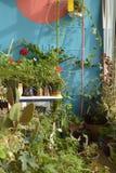 Ett litet växthus hemma royaltyfri fotografi