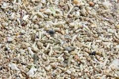 Ett litet vaggar in med vit sand på kusten Arkivbild