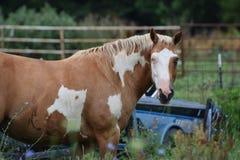 Ett liv för häst` s Fotografering för Bildbyråer