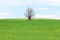 Ett livlöst träd i en Feld Arkivbild