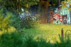 Ett ljust stycke av den stads- naturen Royaltyfria Bilder