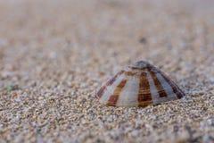 Ett lugna skal på en strandsand Arkivbild