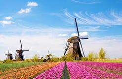Ett magiskt landskap av tulpan och väderkvarnar i Nederländerna arkivbild