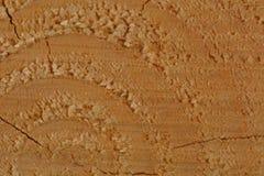 Ett makrofoto av ett nytt klippt träd som visar textur av trät Mjuka varma färger av trät och de fina detaljerna av dess struktur royaltyfri foto