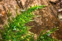 Ett makroskott av djupt - grön, våt och tjock mossa Royaltyfri Fotografi
