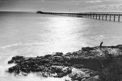 Ett manfiske på en vagga som vänder mot Stilla havet med en sikt av en hamnplats Arkivbilder