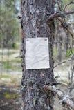 Ett meddelande, en bokstav, ett meddelande på ett träd i skogen Royaltyfri Foto