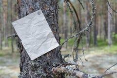 Ett meddelande, en bokstav, ett meddelande på ett träd i skogen Fotografering för Bildbyråer
