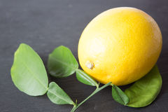 Ett moget citron och citronblad i closeup Arkivbild