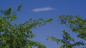 Ett moln som svävar i vinden arkivfoton
