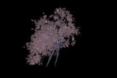 Ett mystiskt träd Royaltyfria Foton