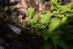 Ett nätt träd fotografering för bildbyråer