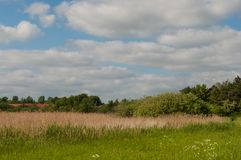 Ett naturfält i Danmark arkivbild