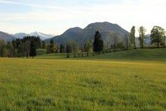 Ett naturligt blommafält fotografering för bildbyråer