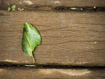 Ett naturligt grönt blad på trägolv arkivfoton