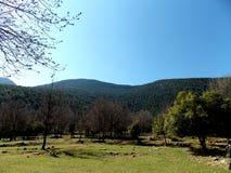 Ett naturligt grönt landskap av ett libanesiskt berg Arkivfoto