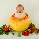 Ett nyfött behandla som ett barn sitter i en kokong poserar i en höstsammansättning på en vit bakgrund Arkivfoton