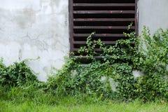 Ett ogräs är fullt av jordning och väggen Arkivbild
