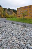 Ett område med stenar på gatan framme av huset Arkivfoto