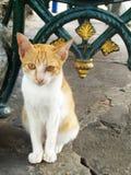 Ett orange sammanträde för strimmig kattkatt Royaltyfri Foto