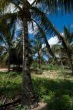 Ett palmträdskäll med snitt i olika områden Fotografering för Bildbyråer