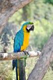 Papegoja på zoo 2 Arkivbild