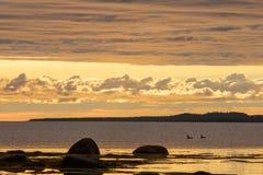 Ett par av änder på solnedgången Arkivfoton